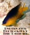 Underwater Photography - Fish Database